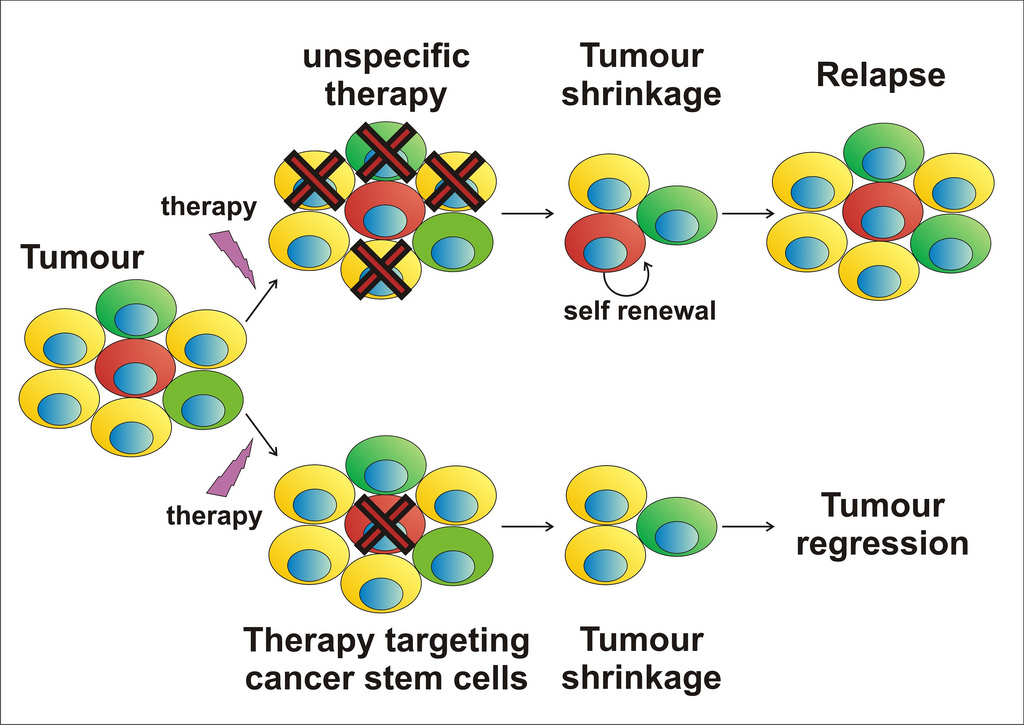 Illustration of cancer stem cells and therapy
