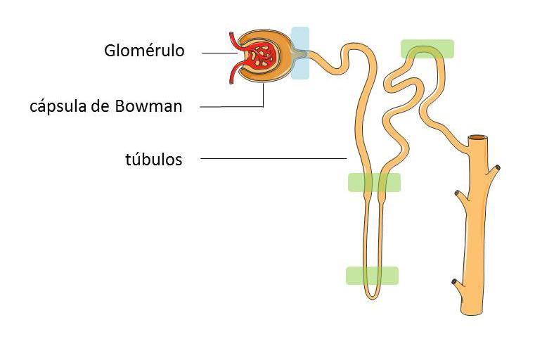 definicion de hormonas esteroidales