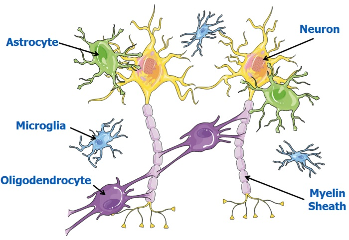 Cerebral Palsy: how could stem cells help?