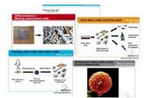 Alles über Stammzellen – ein flexibles Unterrichtsinstrument zum ...