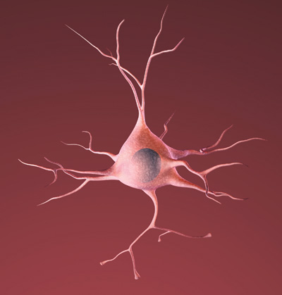 Drawing of a healthy neuron (nerve cell of the brain)