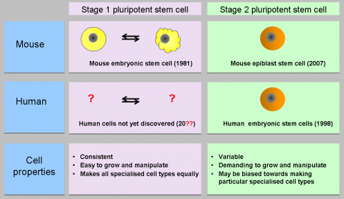 do we still need research on human embryonic stem cells eurostemcell