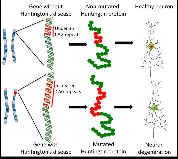 Predictive Genetic testing of Huntington's disease ...