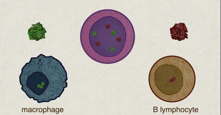 Illustration of cells