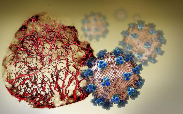 Virus-infected blood vessel organoids