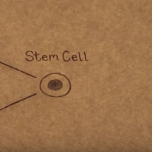 Stem Cell Futures thumbnail
