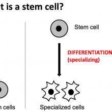 Introducing Stem Cells Thumbnail