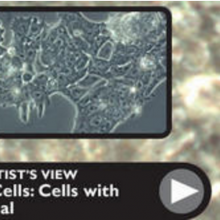 Stem Cells: Cells with Potential