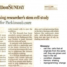 Activity: Stem Cells in the News