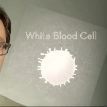 Laboratory-grown Blood Cells: Transfusion of the Future